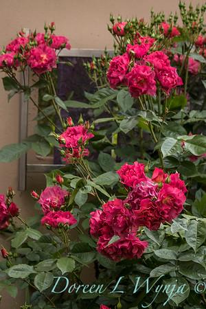 Ernst Garden of colors_2020