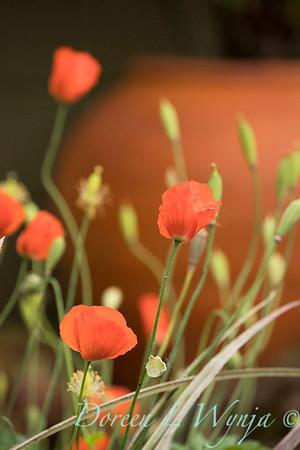 Ernst Garden of colors_2034