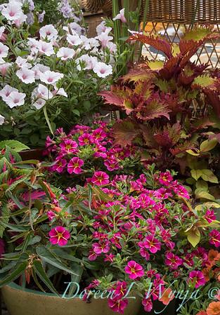 Ernst Garden of colors_2007