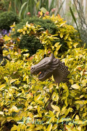 Trachelospermum asiaticum 'Torafu' - dragon art_1348