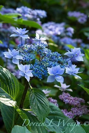Darcy Garden_016