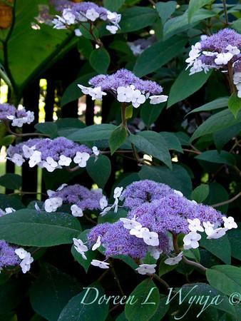 Darcy Garden_010