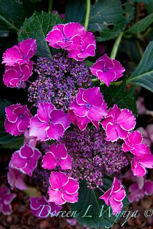 Darcy Garden_023