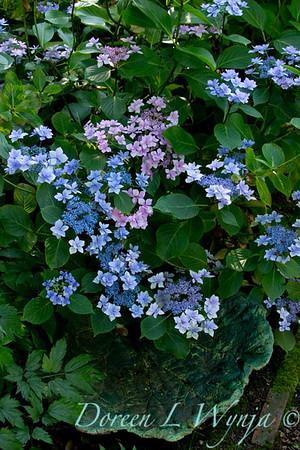Darcy Garden_014