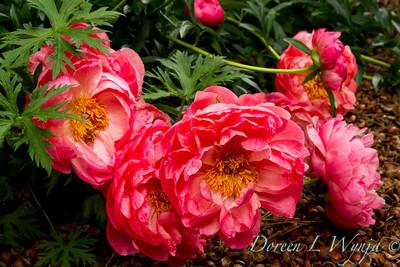 Darcy Garden_032