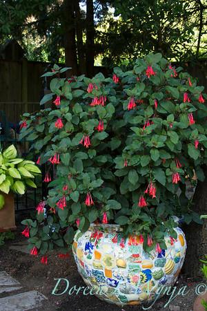 Fuchsia Gartenmeister Bonstedt_021