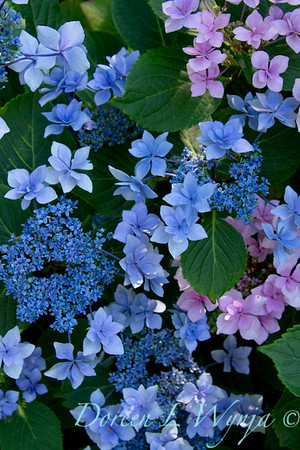 Darcy Garden_017