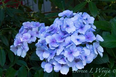 Darcy Garden_022