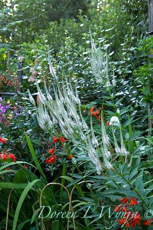 Darcy Garden_054