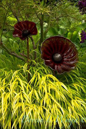 Darcy Garden_066