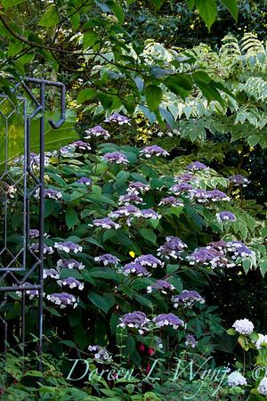 Darcy Garden_007