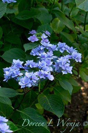 Darcy Garden_015