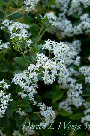 Darcy Garden_027