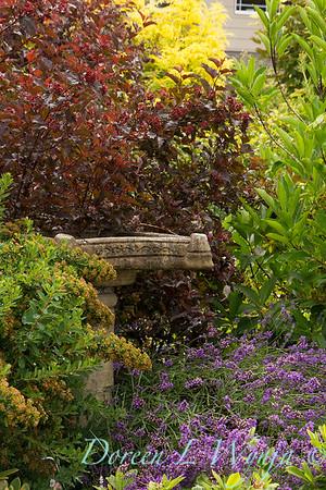 Physocarpus opulifolius Summer Wine_8429