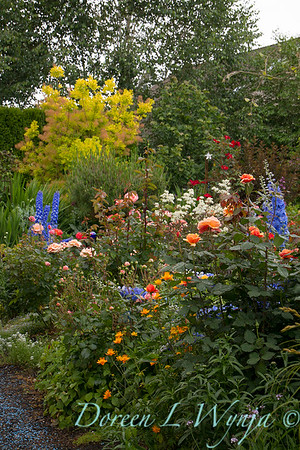 perennial and rose garden_8372