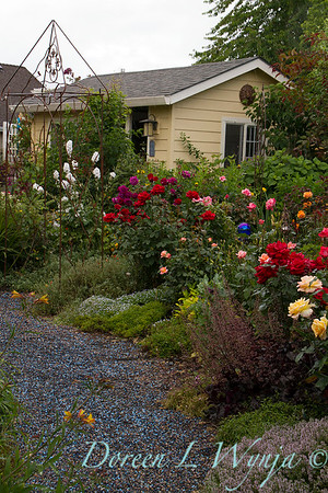 perennial and rose garden_8377