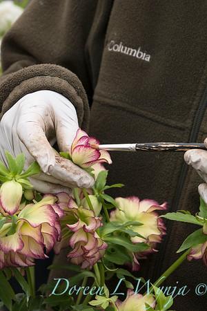 Marietta doing pollination_1285