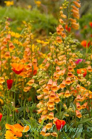 Northwest Garden Nursery__147