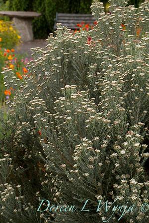 Northwest Garden Nursery_135