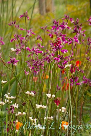 Northwest Garden Nursery__140
