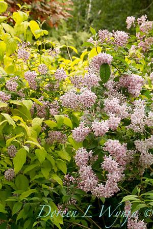 Northwest Garden Nursery__157