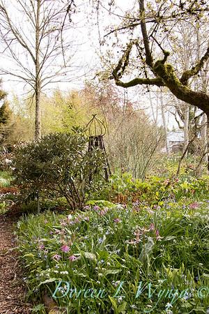 Erythronium revolutum wetlands garden_1853