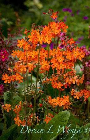 Northwest Garden Nursery__021