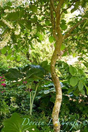 Northwest Garden Nursery__028