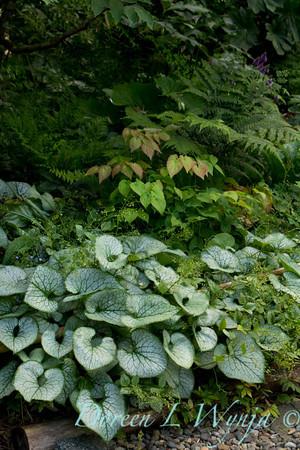 Northwest Garden Nursery__041