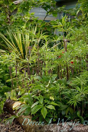 Northwest Garden Nursery__063