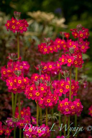 Northwest Garden Nursery__020