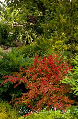 Northwest Garden Nursery__052
