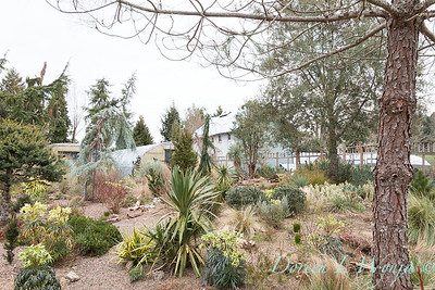 Winter landscape chaparral garden toward barn_3778