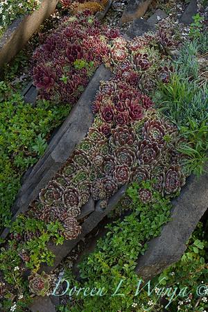Rock Slab succulent garden_5011