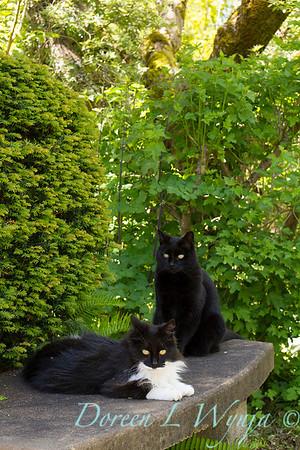 Black & White garden cats - kitty_5052