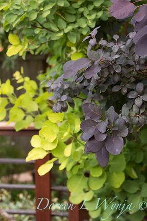 Olga and Ron's Asian Garden_1057