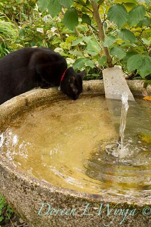 water fountain_3877