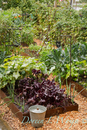 Urban Vegetable Garden_3692