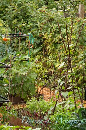Urban Vegetable Garden_3696