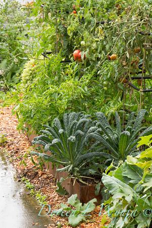 Urban Vegetable Garden_3695