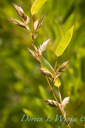 blooming bamboo_2292