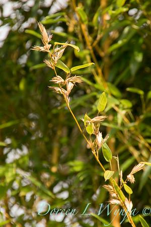 blooming bamboo_2281