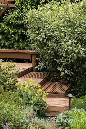 pollinator garden - Cornus alba 'Elegantissima'_2117
