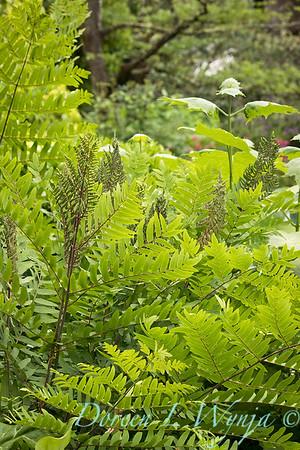 Ann and Jim's Garden_143