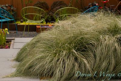 Carex albula_697