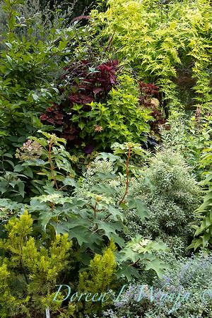 Hydrangea quercifolia 'Pee Wee' - garden textures_6122