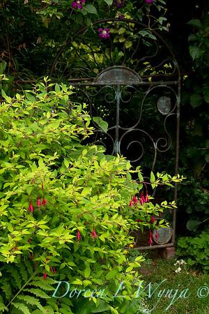 Fuchsia Genii - garden gate_008