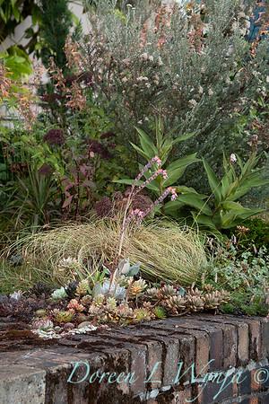 Wes Younie - garden designer_3018
