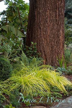 Wes Younie - garden designer_3016
