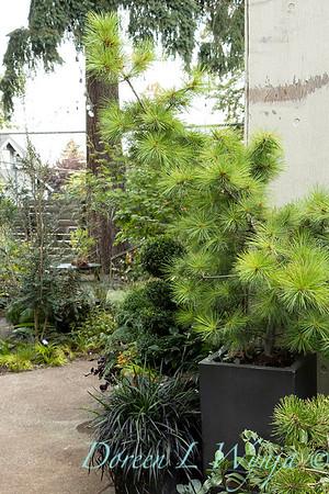 Wes Younie - garden designer_3008